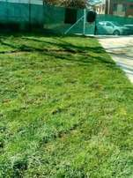 Fresh Instant Lawn With R30/sqm (Free Delivery+Installation)