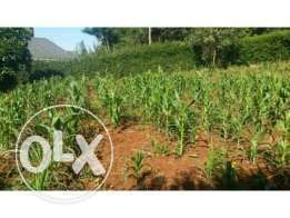 Land 4acres on sell mumias