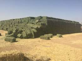 PREMIUM Lucerne Hay Bales Grade A and B