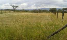 Boma rhodes hay and seeds for sale