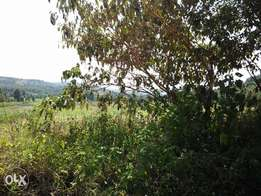 50*100 land at zambezi for sale