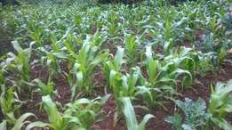 1.25 acres of land in Nanyuki at 1.5m only