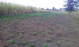 Land for sale in Njoro