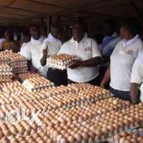 Fresh eggs an clean for sale important buyer should call us.