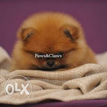 Good health and good luck to all. Thank you. Pomeranian