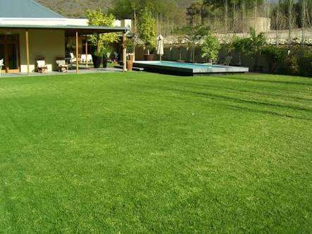 Evergreen instant lawn suppliers Mooikloof - image 4
