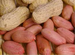 Best 2016 Peanuts Price Wholesale