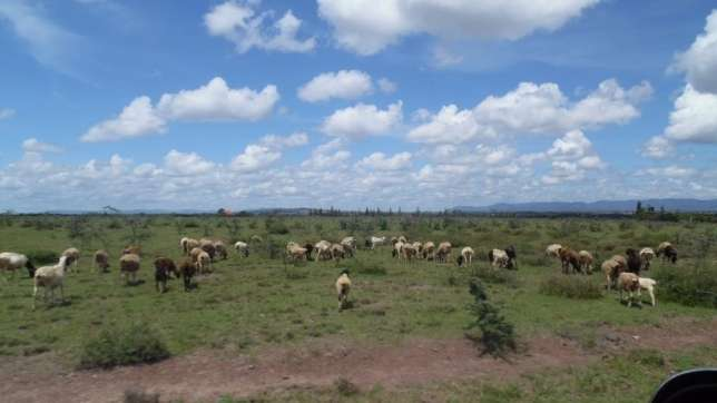 prime 1/8acre plots off eastern by-pass near northland city Ruiru - image 2