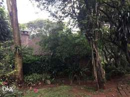 old muthaiga 1 acre