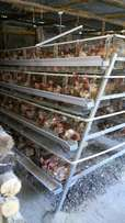 Layers cage for 1000 chicken at kes280000