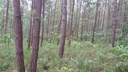 8 acres of land with mature trees for sale in Fort portal at 250M Ugx