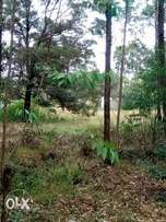 Land lover elgonview 1 1/2 acre good for home and flat 85m