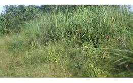 land for sale at Irhirhi measured 100 by 50 ft for 5million