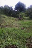 wecome to muranga farm 3m.