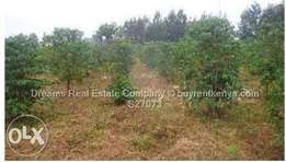Land for Sale 0.5 acre along Kiambu Road