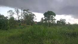 50 acres with each at 15m negotiable in Bombo- Kalule with its tittle