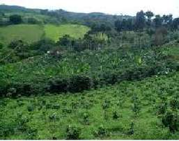 1000 Acres Coffee Farm for Sale in Thika Ksh. 6.5M/Acre