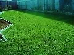 Instant Lawn In Gauteng? Call us