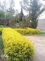 1/2 acre plot for sale in Nyeri
