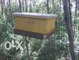 Bee Housing langstroth hives