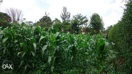 Prime half acre for Sale in Runda Evergreen