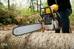 Tree felling and stump removal