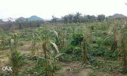 Distress: 6plots fenced in Sam Ewan estate Igbo etche