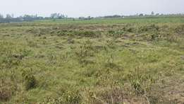 Isinya prime 1/8 acre plots for sale