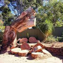 Tree felling Pretoria East, Tree cutting and tree Removal