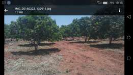 Horticultural farm.20 Acres iko na 2000 mature trees. Ready Farm.