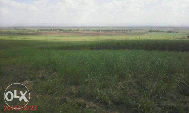 Land for sale in kibos kisumu Kisumu CBD - image 4