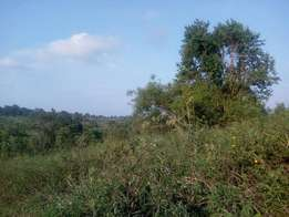 An half acre of land on sale in kasangati at 50m