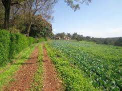 50 by 100 plots in Kagio town