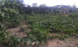 full plot of land is ready to be sold out at maye ikorodu