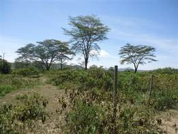 longonot offers 2000 acres 20km from tarmac near kedong ranch