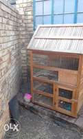 Rabbits and Rabbit Cage