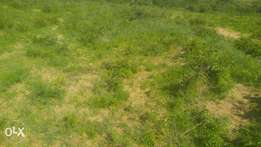 Land for sale(grassland good for wheat and hotel)