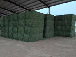 Grade A and B Lucerne Hay Bales