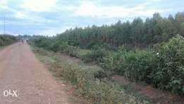 1.5acre land on sale in Nyaburu area,Rongo town.With 13,000 trees