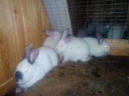 Кролики ОБМЕН на всякое разное...