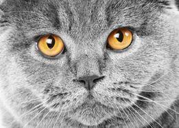 Кот приглашает на вязку!