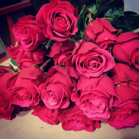 Саженцы роз от производителя!