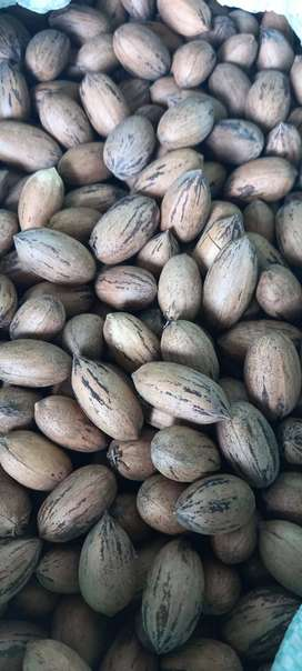 Peacan Nuts for sale
