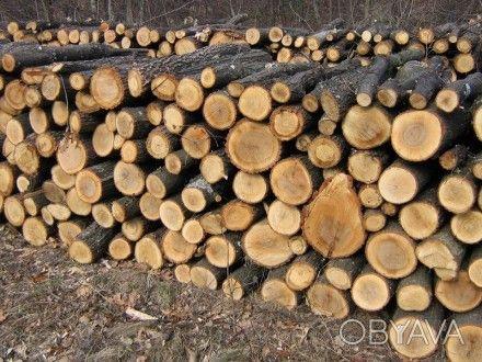 Продам дрова твердих порід Обухов - изображение 1