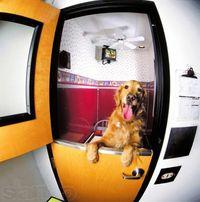 ZOO-Hotel : Пансион для собак и кошек