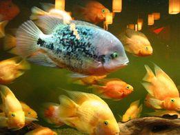 Чистка прибирання акваріумів. Аквадопомога.