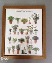 Obraz Plakat z ziołami Drewniana Rama - Oryginalny z AllPosters