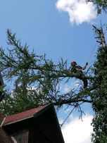 Wycinka, pielęgnacja drzew. Kompleksowo