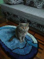 Кот ищет кошку