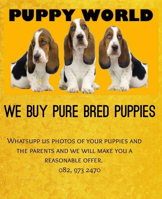 We buy puppies 0